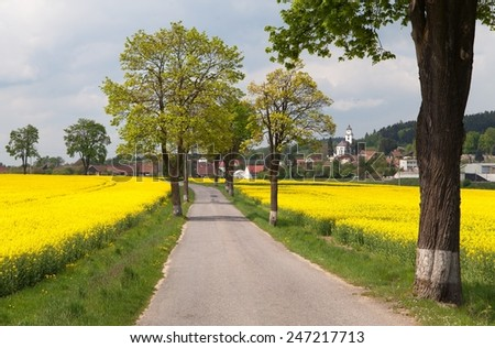 road with village , lime trees and rapeseed field - stock photo