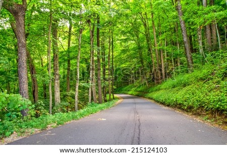 Roaring Fork Motor Nature Trail. View of the forested hills along the Roaring Fork Motor Nature Trail in the Great Smoky Mountains National Park. Gatlinburg, Tennessee. - stock photo