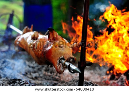 Roasting piglet on the split firewood - stock photo