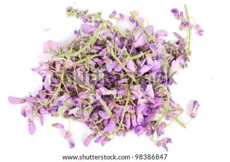 Robinia flowers - stock photo