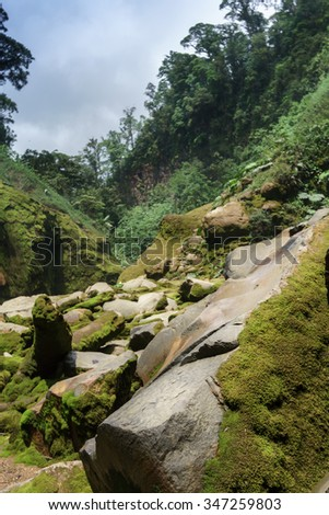 Rocks covered by moss in a forest, Costa Rica - stock photo