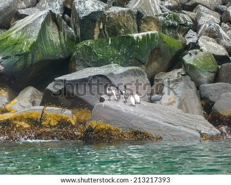 Rocks in the Pacific Ocean where birds nest at the entrance to the bay Avachinskayay - Kamchatka, Russia - stock photo