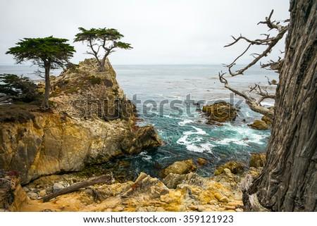 Rocky Cliff and Trees in Carmel Near Pebble Beach.  Carmel, California, USA. - stock photo