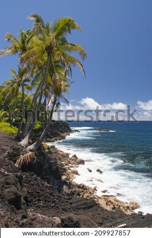 rocky lava coast shoreline with coconut trees - stock photo