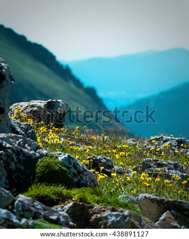 Rocky Mountain National Park hillside view with wildflowers.  Nature abstract.    - stock photo