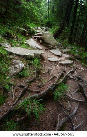 Rocky path with fresh grass and yellow flowers in the green pine-tree forest. Carpathian mountains, Ukraine - stock photo