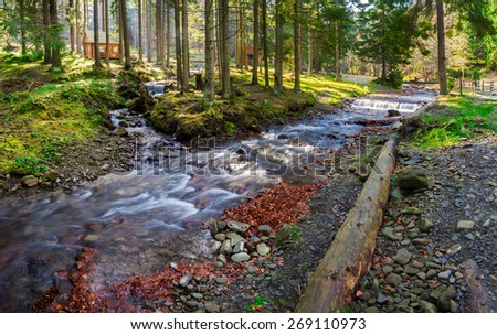 rocky shore of the wild river in coniferous forest of national park with few bowers late in autumn - stock photo
