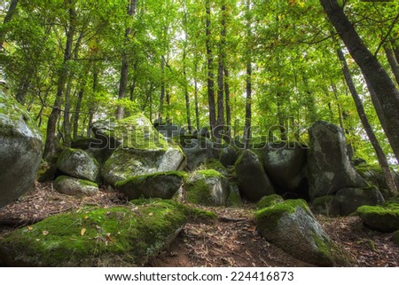 rocky woods - stock photo
