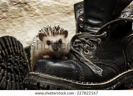 rodent cute hedgehog baby and shoes retro background - stock photo