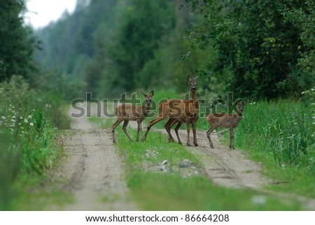 Roe deer family - stock photo