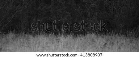 Roe deer hiding, black and white - stock photo