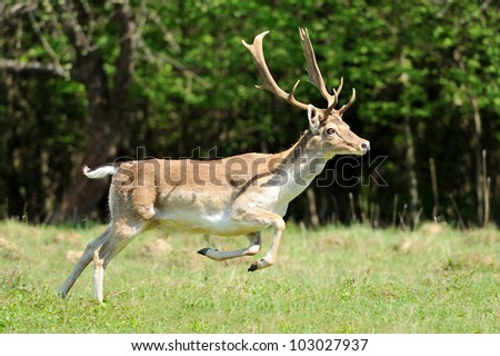 Roe deer in forest - stock photo