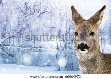 roe - doe , red deer in winter forest - stock photo