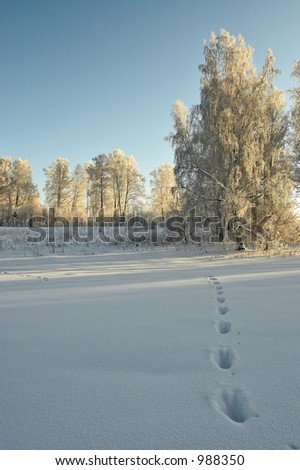 Roe's trail in the deep snow - stock photo
