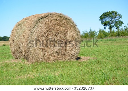Roll of hay lie on a green meadow. Summer - stock photo