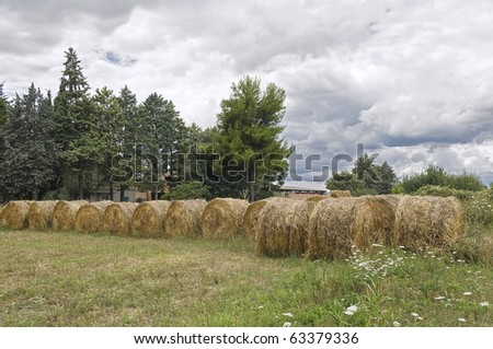 Rolling haystacks. - stock photo