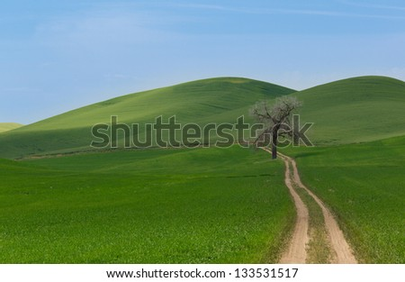 Rolling hills, road, and tree - stock photo