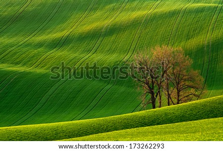 Rolling hills with fields in sunset light suitable for backgrounds or wallpapers. Southern Moravia, Czech republic - stock photo