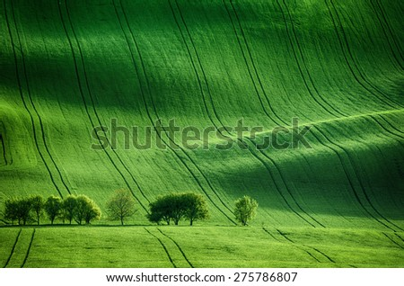 Rolling sunny hills with fields  and trees suitable for backgrounds or wallpapers, natural seasonal landscape. Southern Moravia, Czech republic - stock photo