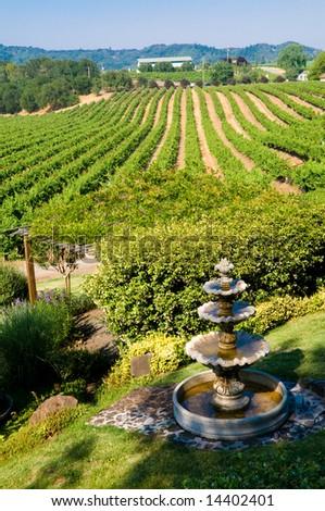 Rolling vineyards in Napa, California. - stock photo