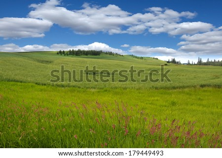 Rolling wheat fields and blue sky - stock photo