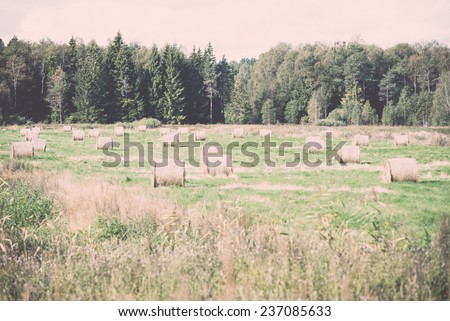 rolls of hay in green field in country - retro, vintage style look - stock photo