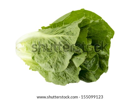 Romain Lettuce on a white background,  (with clipping work path) - stock photo