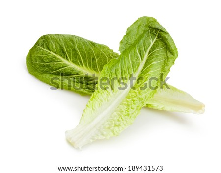 romaine lettuce isolated - stock photo