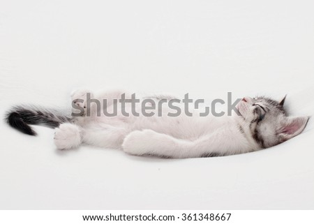 Roman kitten lying - stock photo
