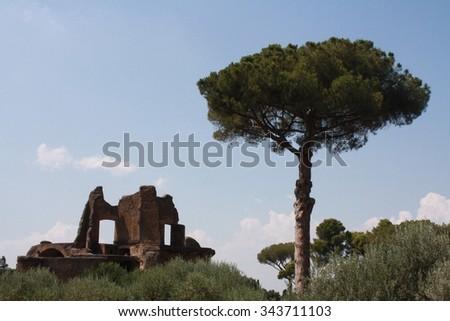 Roman ruin and cypress tree - stock photo