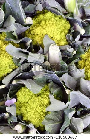 Romanesco broccoli cabbage (or Roman Cauliflower) - stock photo