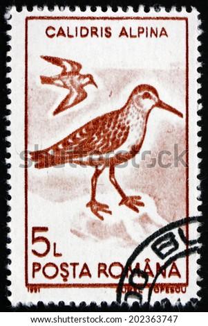 ROMANIA - CIRCA 1991: a stamp printed in the Romania shows Dunlin, Calidris Alpina, Wader Bird, circa 1991 - stock photo