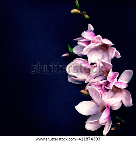 Romantic background with magnolia flowers. Spring background. Vintage card - stock photo