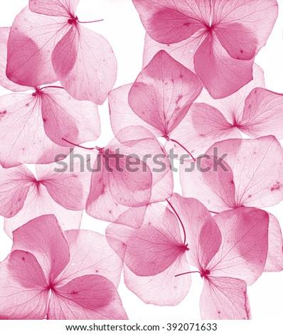 romantic flower petal close up - stock photo