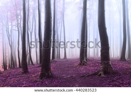 Romantic foggy forest - stock photo