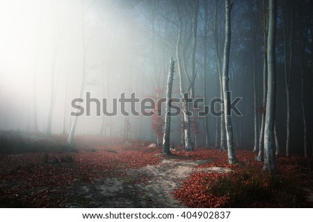 Romantic light through the fog shines on the trail in misty forest, during an autumn day - stock photo