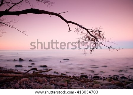 Romantic morning. Bended tree above sea level,  boulders sticking out from smooth waves. Pink horizon with first hot sun rays. - stock photo