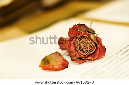 Romantic picture of dessicated rose on open book - stock photo