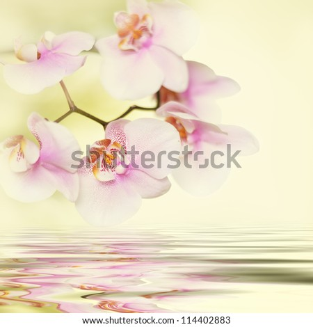 romantic pink orchid flower background reflected in water - stock photo