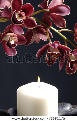 Romantic still-life with orchid(catteya) flower and candle on black - stock photo