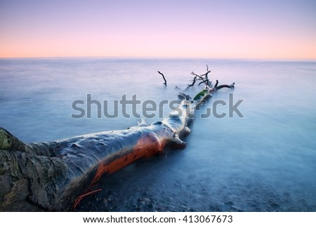 Romantic sunset time. Lonely fallen  tree on empty  stony coastline. Pink sky above smooth smoky water level. Death tree with  branches in water, naked roots on beach. - stock photo