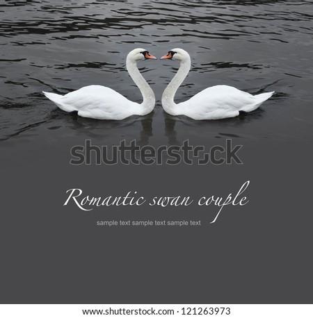 Romantic swan couple in black water - stock photo