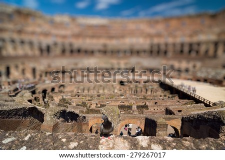 ROME - APRIL 17, 2013: Dove in The Colosseum (Coliseum) also known as the Flavian Amphitheatre on a sunny spring day. Rome, Italy. - stock photo