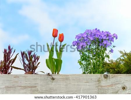 Roof Garden - stock photo
