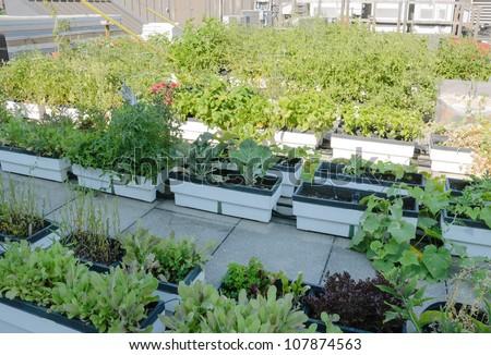 Roof Garden on Urban Building - stock photo