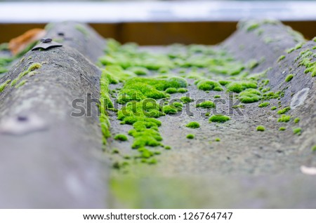 roof with moss - stock photo