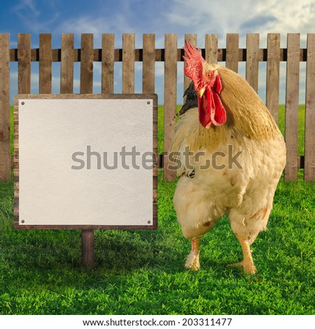 Rooster standing beside the blank white paper on wooden board - square composition - soft focus - stock photo
