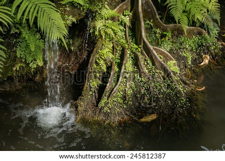 roots of big big tree next to the small waterfall  with beautiful sunlight shining from side - stock photo