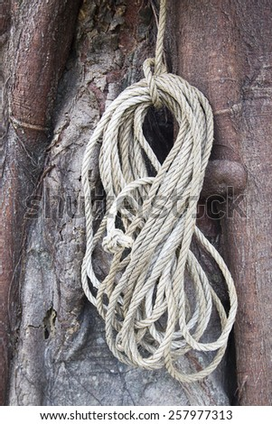 Rope hang up the tree - stock photo