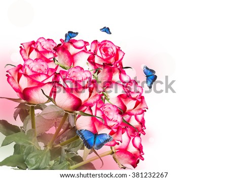 Rose and butterfly isolated on white background. Pink rose with free space  - stock photo
